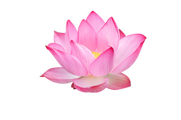 Foto auf AluDibond Lotosblume Lotus flower isolated on white background. Nature concept For advertising design and assembly. File contains with clipping path so easy to work.