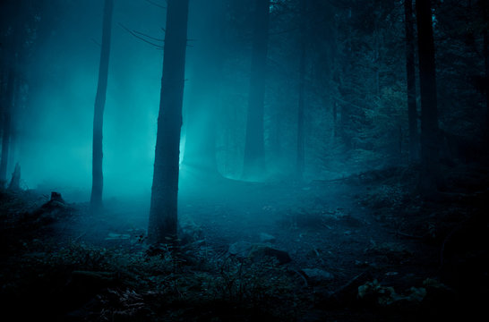 Fairytale landscape. Mysterious light in the night among tree trunks at the night spooky forest.