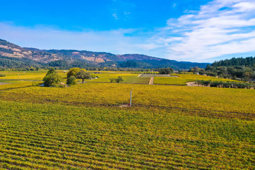 Aerial view of the verdant hills with trees in Napa Valley