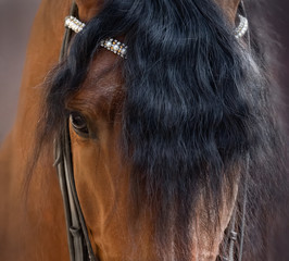 Fototapete - Close up image of eye, head and forelock of Andalusian horse.