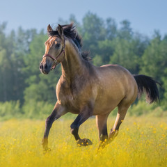 Andalusian horse in field of flowers on farm.