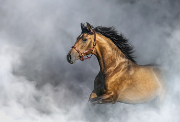 Wall Mural - Andalusian horse in halter in light smoke with space for text.
