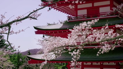 Wall Mural - Cherry blossoms at Chureito pagoda in Spring, Japan.