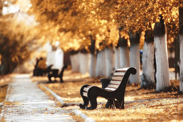 landscape in autumn park bench / beautiful garden bench, concept of rest, nobody in autumn park, landscape background, fall