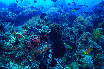 Poster Coral reefs coral reef underwater / lagoon with corals, underwater landscape, snorkeling trip