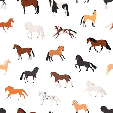 Horse breeding flat vector seamless pattern. Purebreed mares and stallions decorative texture. Thoroughbred racehorses on white background. Equine themed wallpaper, textile cartoon design.