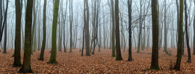 Autumn foggy forest without leaves