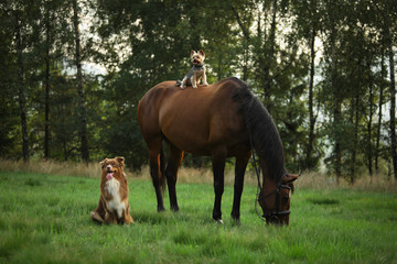 Dogs and a horse