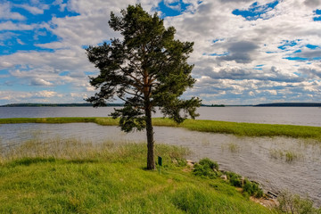 Tree on the shore of lake Seliger