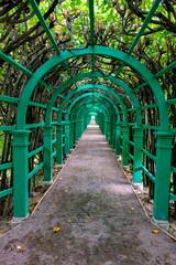 Green alley, Arkhangelskoye public park, Moscow region, Russia