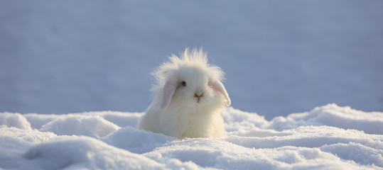 white funny fluffy rabbit in the snow