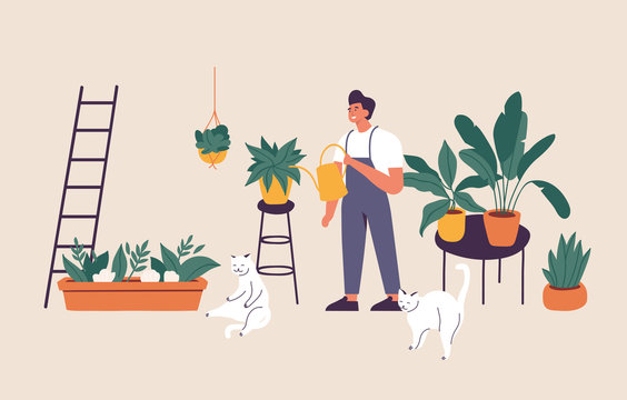 Vector illustration man taking care of houseplants growing in planters. Young cute man cultivating potted plants at home.