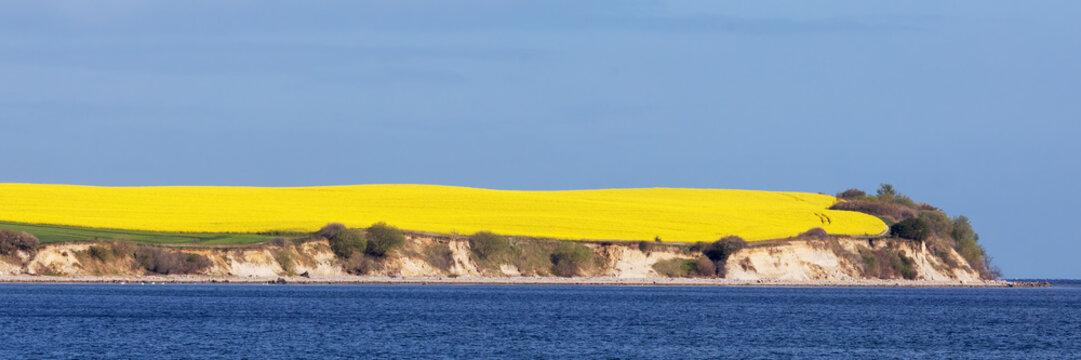Steilküste mit Rapsfeld an der Ostsee bei Boltenhagen in Mecklenburg-Vorpommern, Deutschland