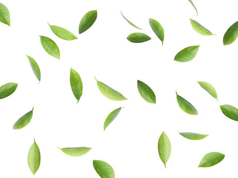 Flying fresh citrus leaves on white background