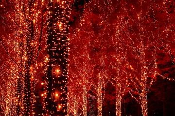 Fototapeten Violett rot クリスマスイルミネーション