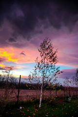Printed kitchen splashbacks Eggplant Sunset landscape