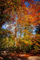Foto auf Leinwand Braun Autumn landscape in Plitvice Jezera Park, Croatia