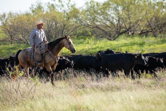 Working Texas Cowboy