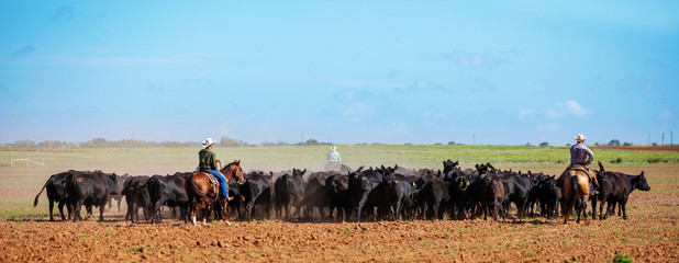 Cattle Roindup