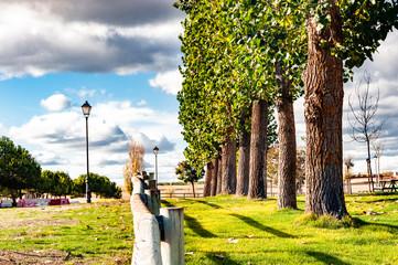 Arboles en parque, intensos colores de la naturaleza