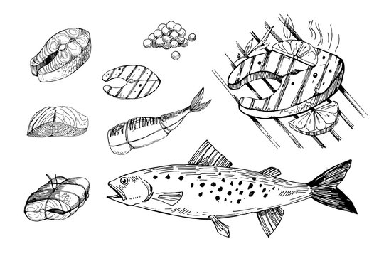 Fish food, salmon, steak, filet. Hand drawn outline converted to vector. Isolated on transparent background