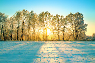 Photo sur Plexiglas Piscine sunny winter landscape with sunrise