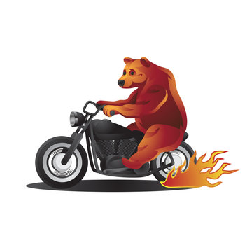 Animal character bear rides a motorcycle on a white isolated background. Vector image