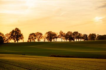 Obraz Zachód słońca pole drzewa - fototapety do salonu