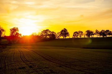 Zachód słońca pole drzewa