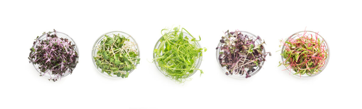 Set of colored micro greens isolated on white