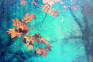 rain window autumn park branches leaves yellow / abstract autumn background, landscape in a rainy window, weather October rain Wall mural