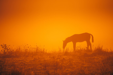 Aluminium Prints Orange Glow Horse silhouette on morning meadow. Orange photo, edit space.