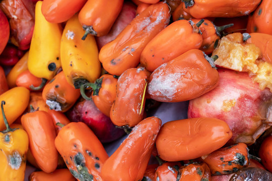 rotten vegetables, colored bell sweet peppers, orange. mouldy. spoiled foods