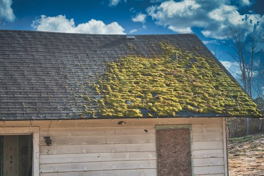 Moss covering the roof of a  wooden house in a village