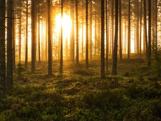 Aluminium Prints Crimson morning in the forest