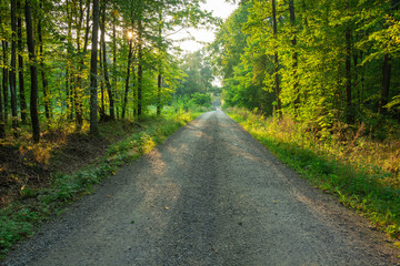 Acrylic Prints Nature Gravel road through a green forest and the sun behind the trees