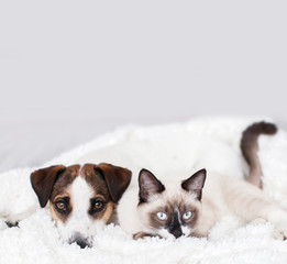 Cat and dog together on white plaid
