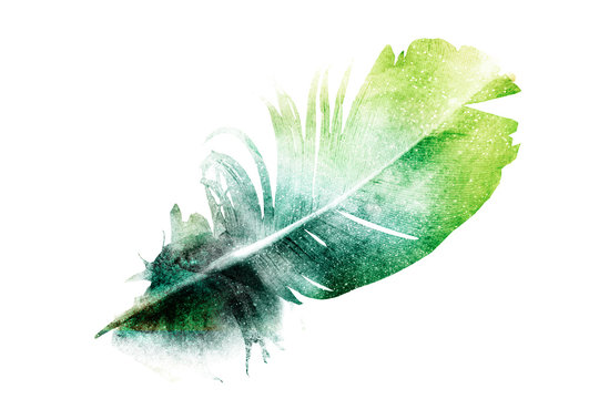Watercolor feather with butterfly