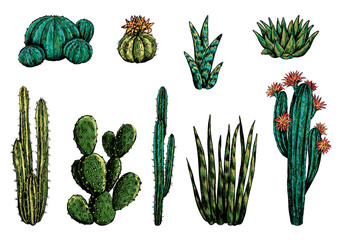 Hand drawn vector illustration. Collection of different varieties of cacti. Set of desert plants. Vintage botanical sketches isolated on white. Decorative colorful elements for design, typography etc.