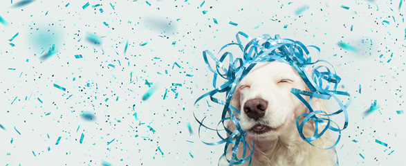 Banner happy dog present for new year, carnival,  christmas, birthday or anniversary, wearing a blue serpentines on head. isolated against gray background with confetti falling.