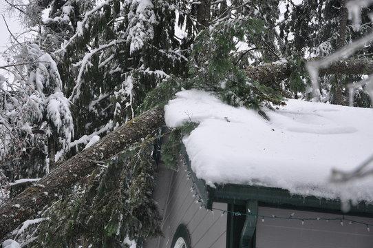 Tree Damage to House