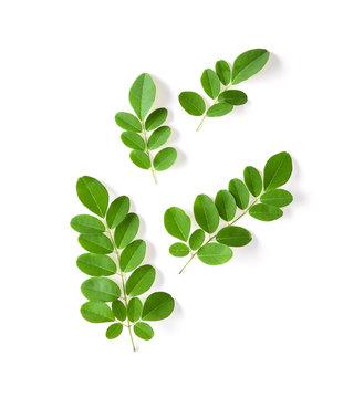 Moringa leaf isolated on white