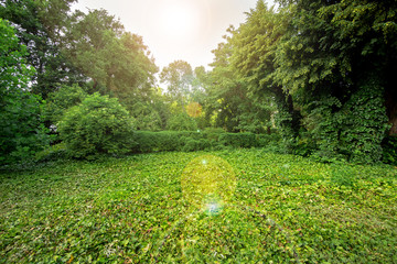 green plants in a park with green trees and a glade in ivy leaves with a sun flare on the sky.