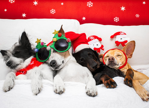 christmas santa claus dog  couple of dogs