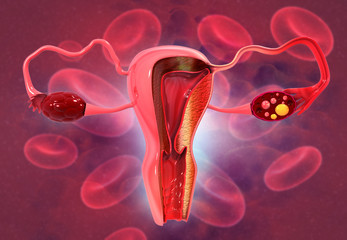 Anatomy of female reproductive system. 3d render.