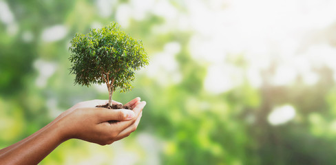 Wall Mural - hand holding tree on blur green with sunshine  background. concept eco earth day