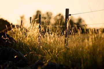 Fence in meadow Fotobehang