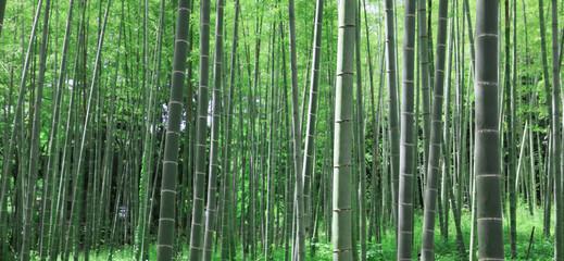 竹林 竹 新緑の竹林 新緑 竹畑