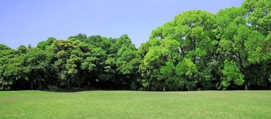 Türaufkleber Pistazie 芝生 芝生広場 芝 芝公園 グリーン 新緑