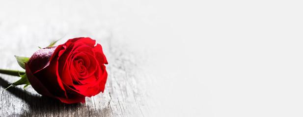 Keuken foto achterwand Roses Red rose on wood